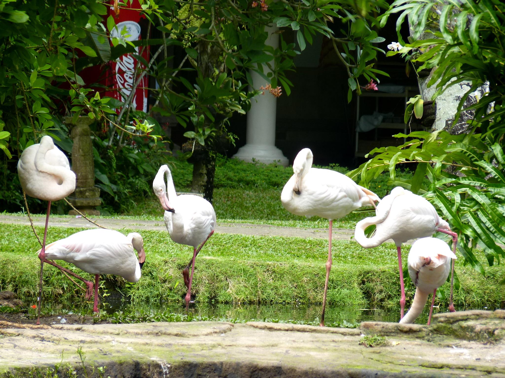 Bali Bird Park Mommies Daily