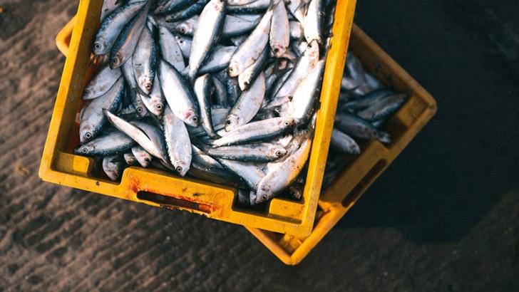 ikan lokal mpasi